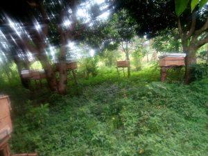 Beehives in Kenya