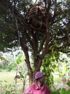 Ugandan bees